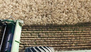 Campaña 2017/18: el trigo alcanzó alta producción y baja proteína