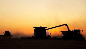Terminó la cosecha de trigo y es récord: 17 millones de toneladas