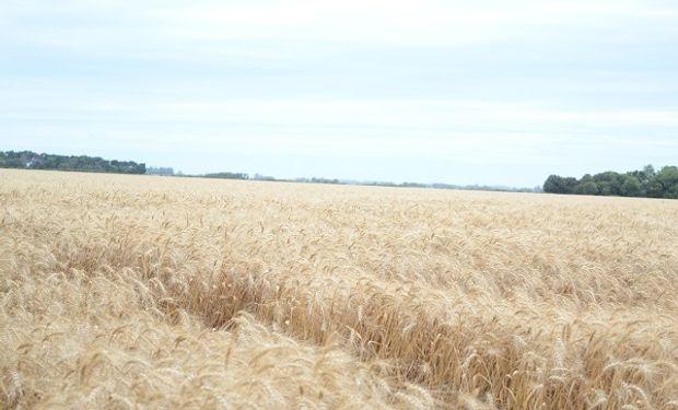 El costo de cosecha promedio de trigo en la provincia de Córdoba fue de $ 1.024 por hectárea.