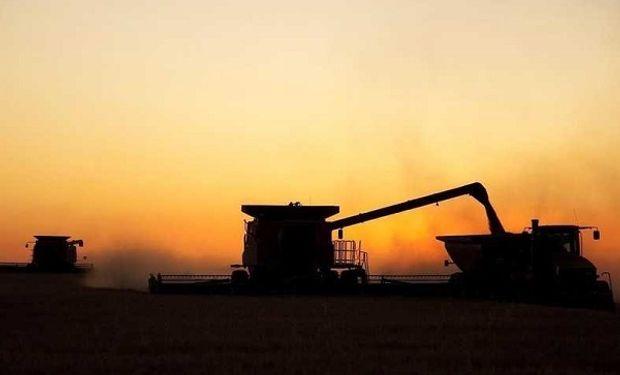 Los rendimientos marcaron picos de producción que alcanzaron los 54 quintales.