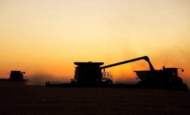 La campaña de trigo 2018/19 estimada en 18,7 millones de toneladas entra en el tramo final con lluvias inoportunas.