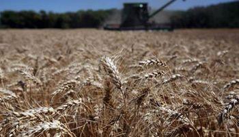 Trigo: en tres meses, la Argentina colocó la mitad de su saldo exportable