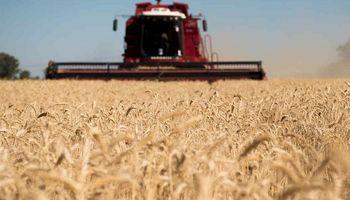 Cómo será el remate del primer lote de trigo