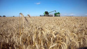 Flexibilizan normas para exportar trigo