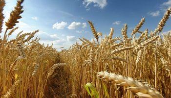 Después de Rusia y Estados Unidos, Brasil buscaría comprar trigo de Lituania