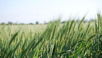 Córdoba: el margen del doble cultivo supera en un 90 % al de la soja de primera