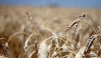 Trigo y cebada: el Gobierno estima una inversión de US$ 4250 de productores