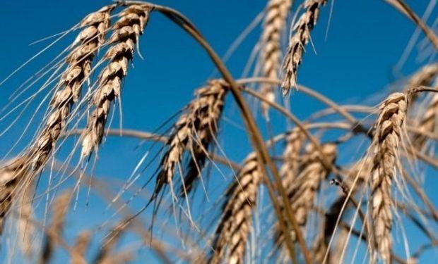 Acuerdo para la determinación de la calidad de trigo.