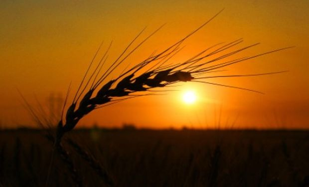 Las malas condiciones observadas en los cultivos del trigo de invierno en EE.UU. brindaron soporte adicional a los precios.