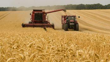 El trigo alcanza mínimos en 8 meses en el mercado de Chicago