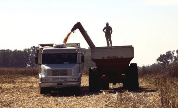 Campaña. Se sembraron 5,35 millones de hectáreas y se espera una producción de 15,22 millones de toneladas.