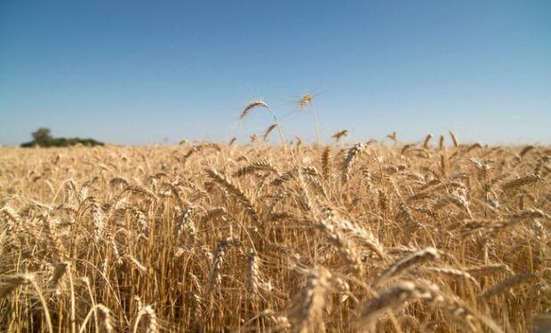 Los datos surgen de la Subsecretaría de Mercados Agropecuarios del Ministerio de Agroindustria de la Nación.