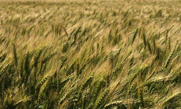 El Inase también informó que 1224 grandes usuarios de semillas (GUS) no cumplieron con la declaración jurada.