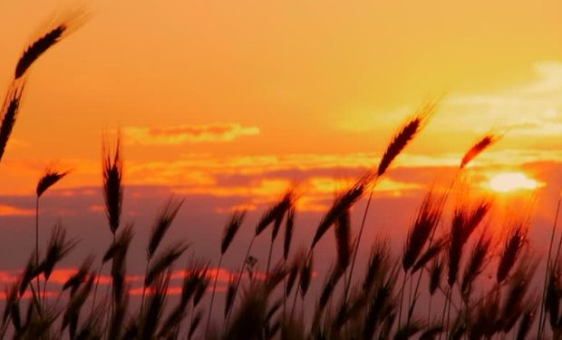 La condición de los cultivos reportada da sostén a las cotizaciones.