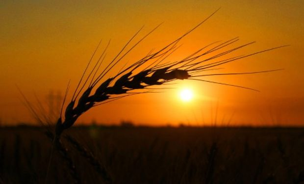 Siguen las subas para el trigo.