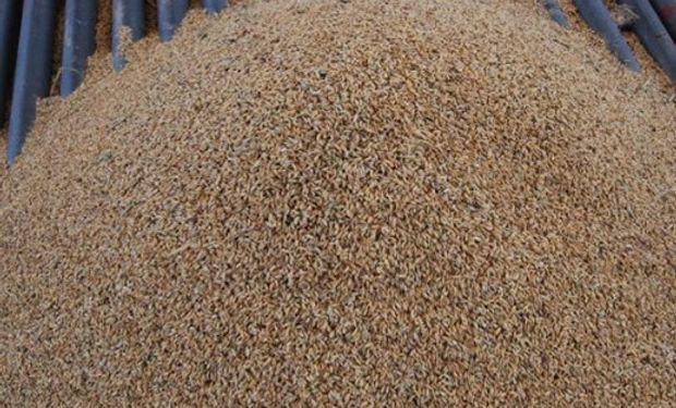 En trigo, las ventas de los productores a la exportación subieron 101% interanual, al totalizar poco más de 11,5 millones de toneladas al miércoles 2 último.