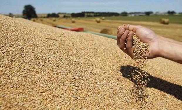 Si bien falta atravesar etapas claves para el cultivo, se proyecta una producción triguera en torno a los 16 millones de toneladas.