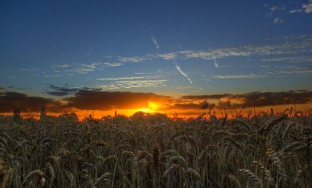 Noticias de una contaminación radiactiva en los montes Urales genera preocupación por las exportaciones de trigo de Rusia.