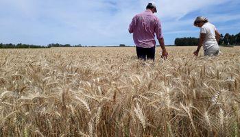¿Cuánto trabajo generan las cadenas agroindustriales? Cifras y análisis detrás de los 3,7 millones de puestos del sector