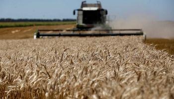 Molinos brasileros anticipan su rechazo al trigo HB4 que se aprobó en Argentina
