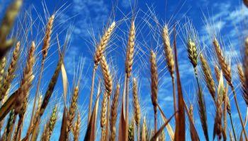 Por restricción Argentina, Brasil acude al trigo extra-Mercosur