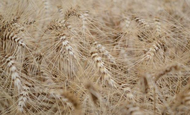 Argentina vuelve a exportar cargamento récord de trigo hacia Estados Unidos.