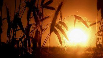 Capitanich admitió que hay distorsión en los precios del trigo