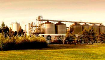 Cebada cervecera: ofrecen convenios con precios superiores a los del trigo