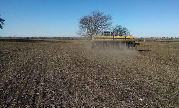 El trigo suma casi 200 mil hectáreas en la zona núcleo.