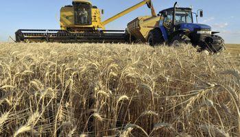 Restricción a la exportación: Bolivia prescinde del trigo argentino