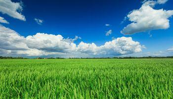 Prevención, el factor clave para tratar las enfermedades en cultivos de invierno