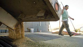 Nuevo récord para el trigo de alta calidad