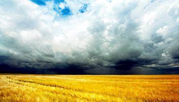 El trigo sigue cayendo en CBOT