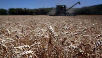 Más trigo y menos cebada en el sudeste bonaerense