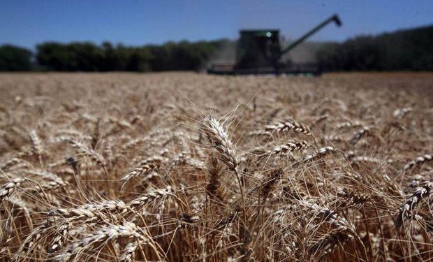 Más trigo y menos cebada en el sudeste bonaerense.