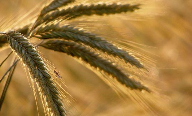Se destacaron las subas del trigo.
