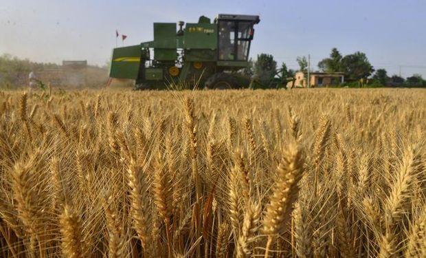 China se posiciona también como un importante comprador de trigo