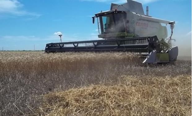 En el norte de Santa Fe el trigo hizo su peor campaña