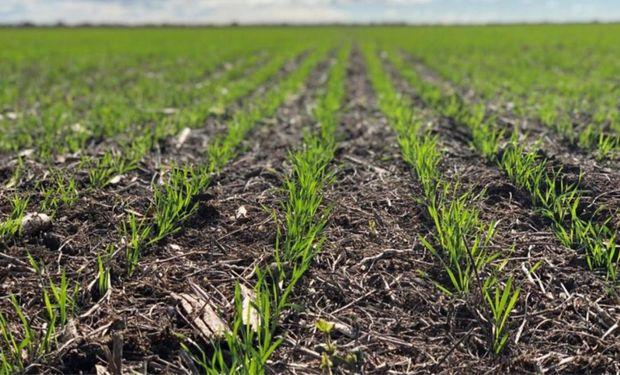 La zona núcleo comienza el mes con reservas de agua adecuadas a óptimas para el trigo