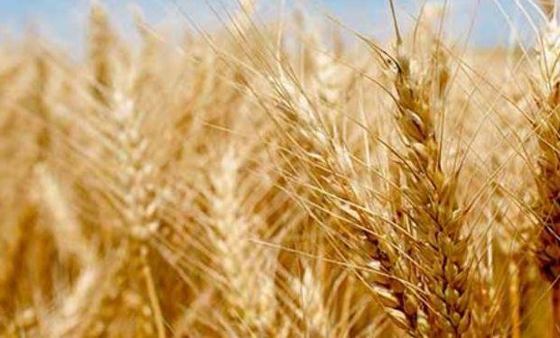 El trigo en alza ante preocupaciones por estrés hídrico para el trigo de primavera en Estados Unidos.