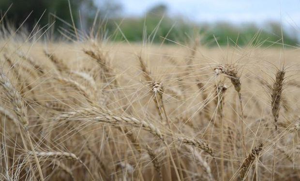 Entre miércoles y jueves se autorizaron para exportación más de 1 millón de toneladas de trigo.