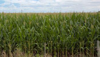 Suelos agradecidos con la recuperación de superficie de los cereales