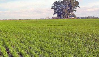 Estimación oficial: 5,3 millones de hectáreas de trigo