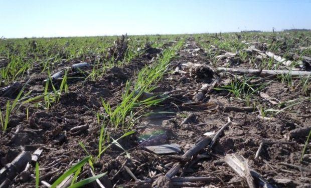 Progreso nacional de siembra ascendió al 21,4 % de las 5.500.000 hectáreas proyectadas para la campaña en curso.