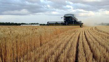 Prevén fuerte inversión para la cosecha fina