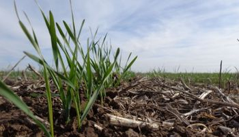 Unas 200 mil hectáreas de trigo no se van a poder sembrar: el déficit hídrico alcanzó a dos nuevas zonas