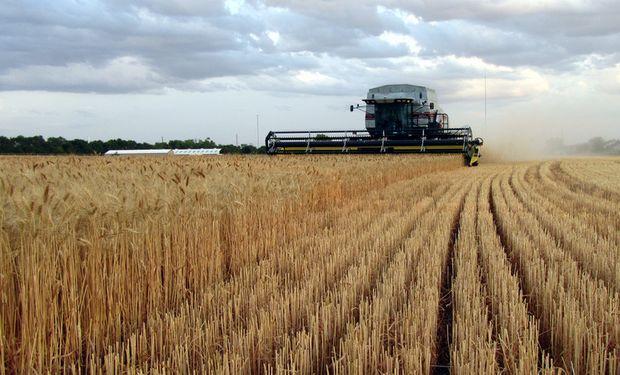 Área prevista de siembra de trigo es de 4,5 millones de hectáreas.