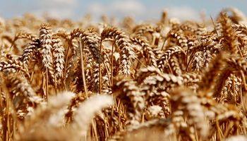 Crean registro de oferta de trigo disponible para comercialización