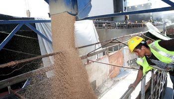 Exportación compró más de 7,2 millones de toneladas de trigo