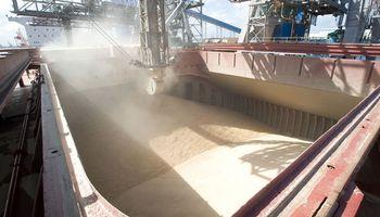 Fuerte avance en las compras de trigo